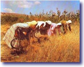 Pimping Jesus - Women Harvesting A Field